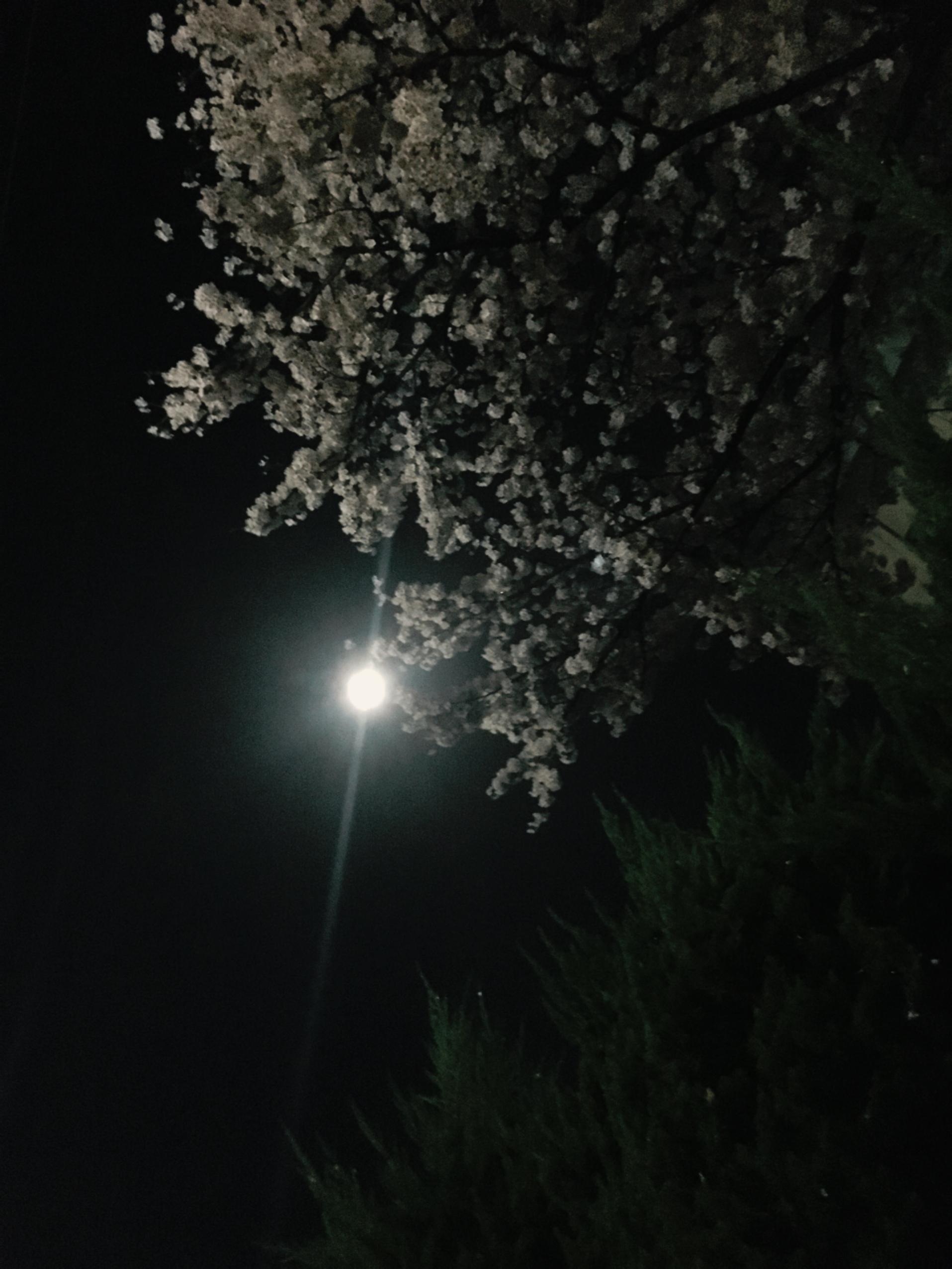 満月にかこつけて、空を見上げよう